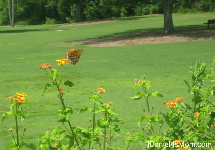 Finding a Butterfly at Legacy Park