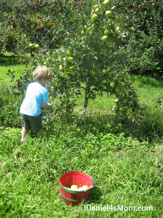 Outside Play- Apples and Apple Orchards Link Up
