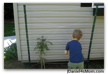 Gardens for Kids- Spider Web Trellis