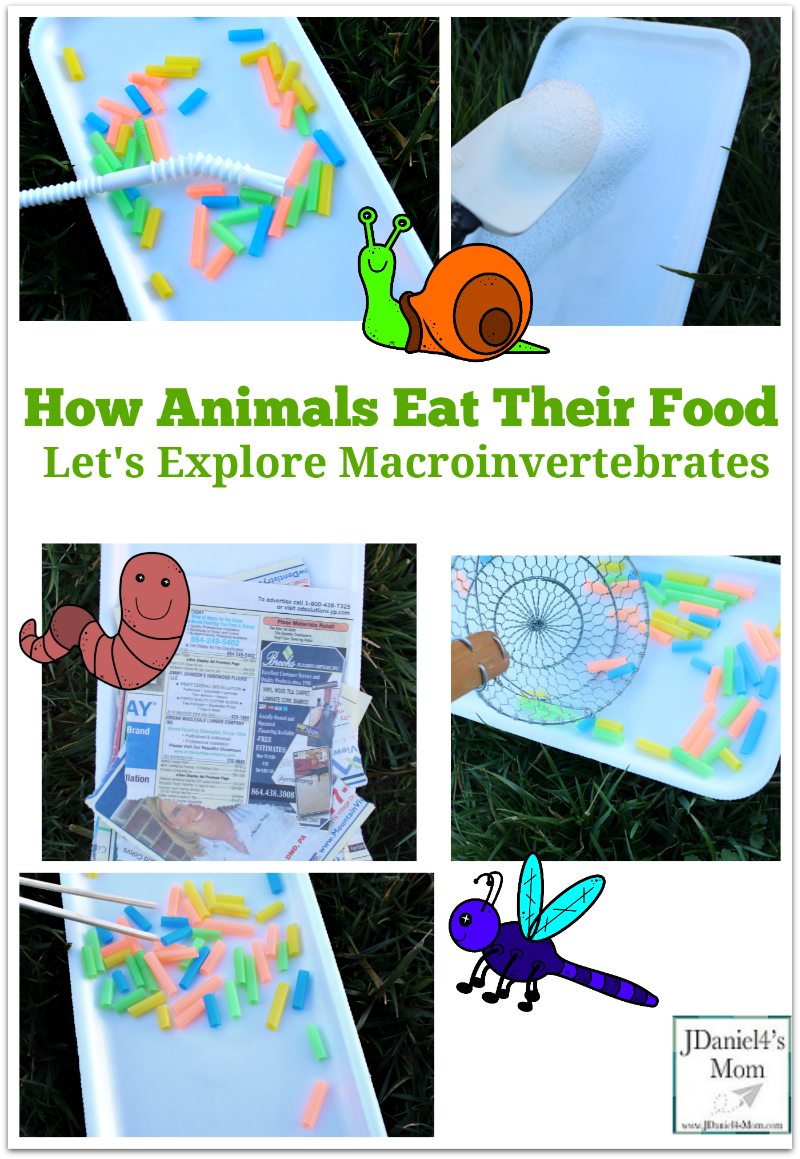How Animals Eat Their Food- Let's Explore Macroinvertebrates- Children will learn how five different macrointvertebrates eat at these interactive learning stations. Kids will love exploring them.