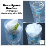 Hydroponic Gardening with Kids - Bean Space Garden : Kids will love watching the bean seed grow without soil.