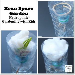 Hydroponic Gardening with Kids - Bean Space Garden