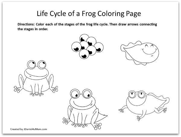 Frog Coloring Pages and Learning Activities- Life Cycle of a Frog Coloring Page