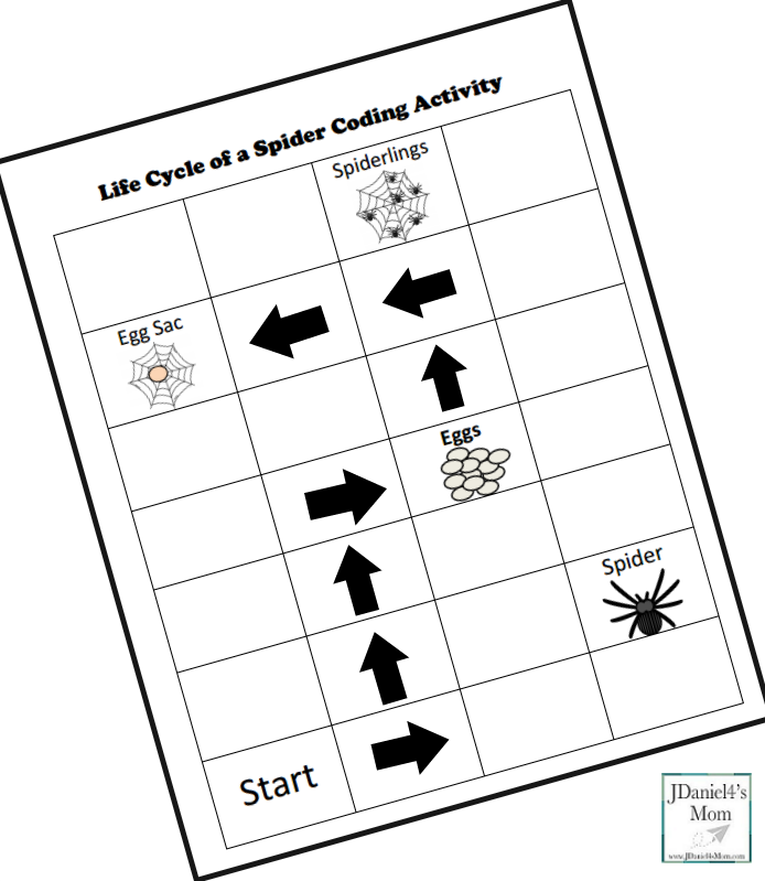Life Cycle of a Spider Coding Activity- Step Three