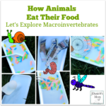 How Animals Eat Their Food- Let's Explore Macroinvertebrates- Children will learn how five different macrointvertebrates eat at these interactive learning stations.