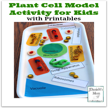 Plant Cell Model Activity for Kids with Printables to Use