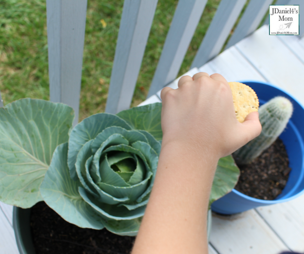 Do Crackers Make Good Pinhole Lens STEM Activity with Recording Sheet (Looking at Cabbage and a Cactus)