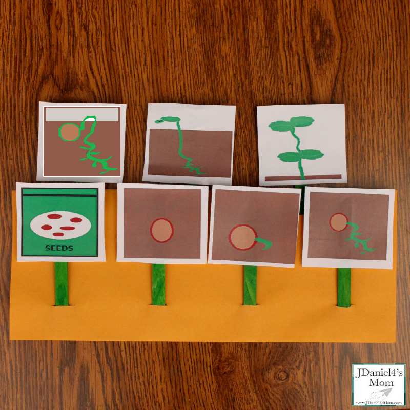 Plant Life Cycle Activity and Printable