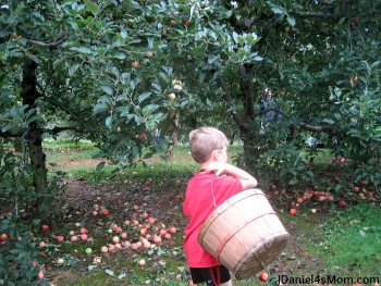 Picking Apples with My Kindergartener