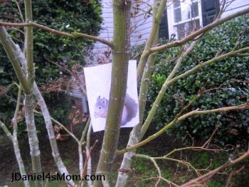 Squirrel's New Year's Resolution - Read.Explore.Learn.- Hide and Seek in the tree