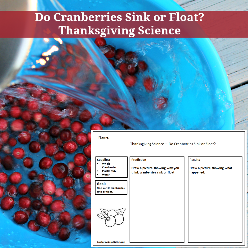 Do Cranberries Sink or Float Thanksgiving Science Experiment