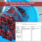 Do Cranberries Sink or Float Thanksgiving Science