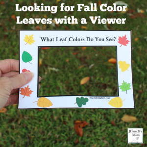 Looking for Fall Color Leaves with a Viewer