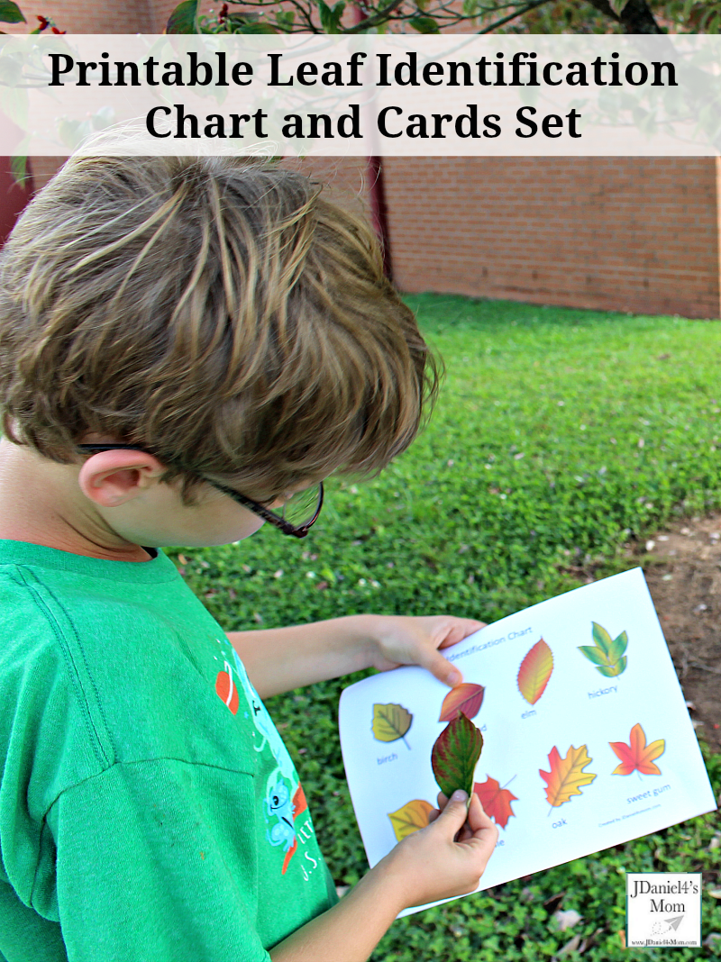 Printable Leaf Identification Chart and Cards Set -Your students at school or children at home will have fun with these leaf identification printables.