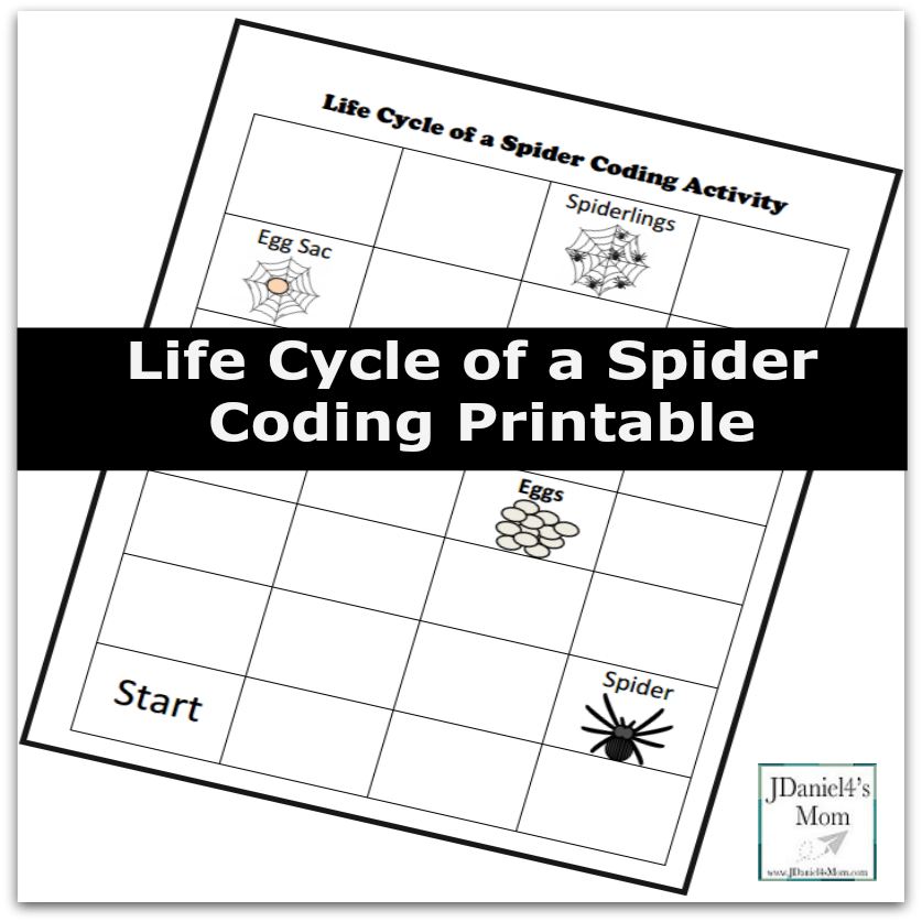 Life Cycle of a Spider Coding Printable for Kids