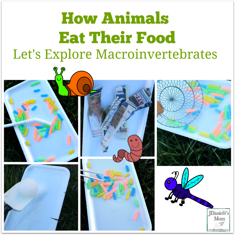 How Animals Eat Their Food- Let's Explore Macroinvertebrates
