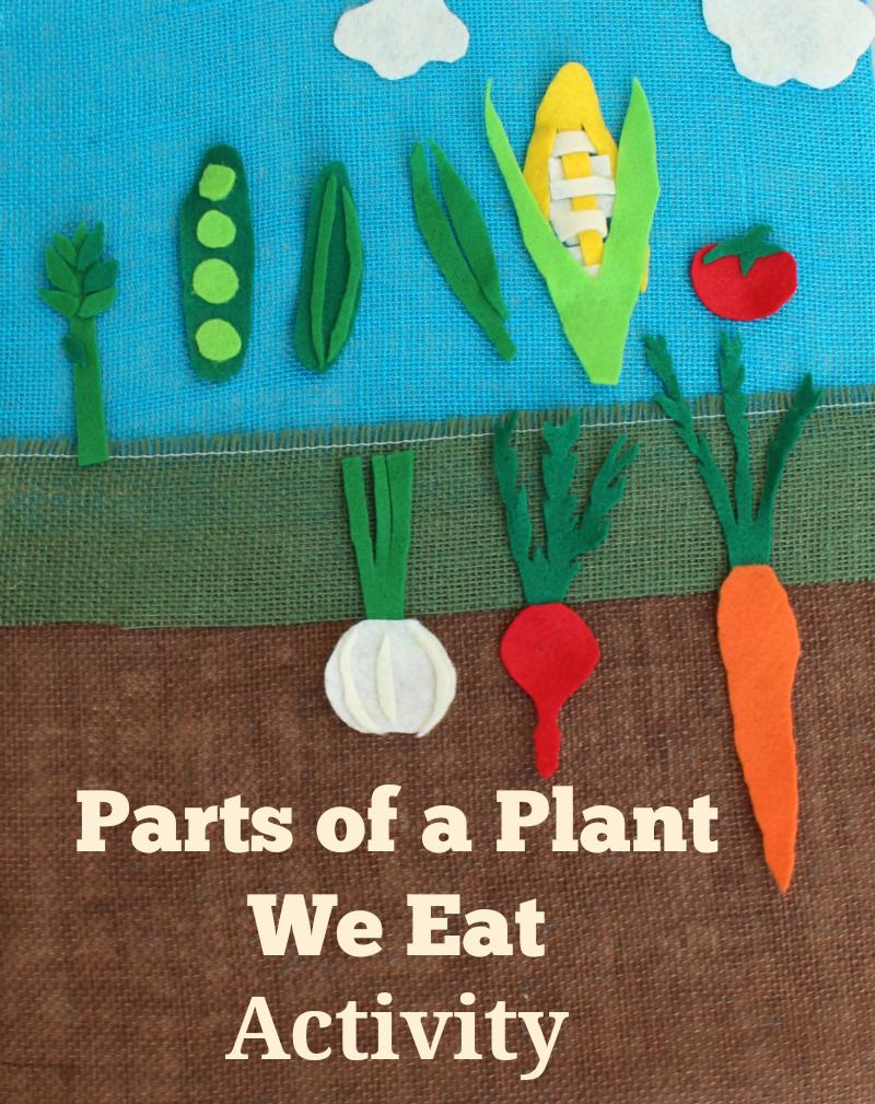 Parts of a Plant We Eat Activity- This activity can be done with felt veggies or a set of free printable veggies.