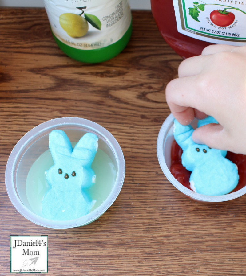 Peeps Experiment with Free Printables- Effects of Liquids on Peeps- Placing the Peeps in liquids.