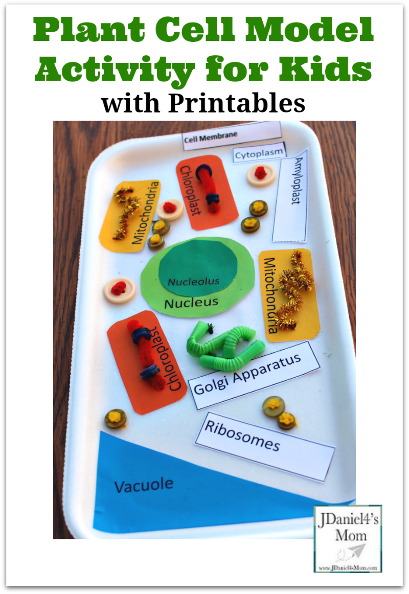 Plant Cell Model Activity for Kids with Printable Plant Sections and Labels
