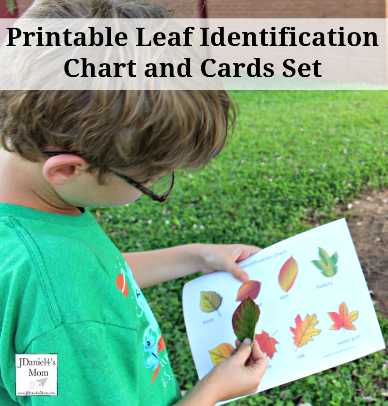 Printable Leaf Identification Chart and Cards Set