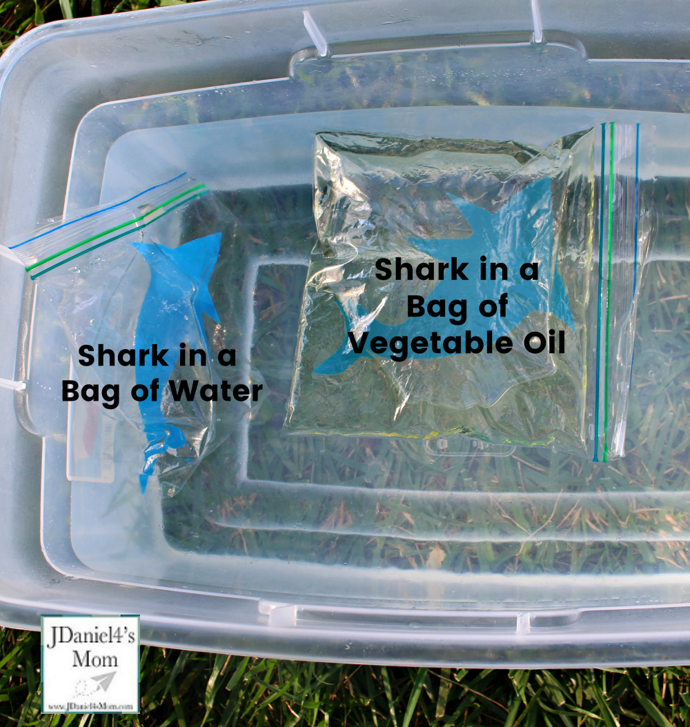 STEM Shark Activities for Kids How Do Sharks Float : Labeled Bags