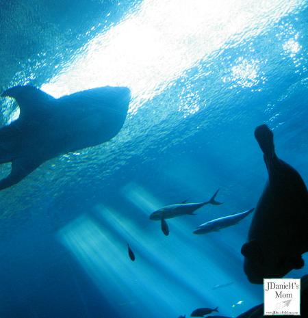 Visiting the Georgia Aquarium and More