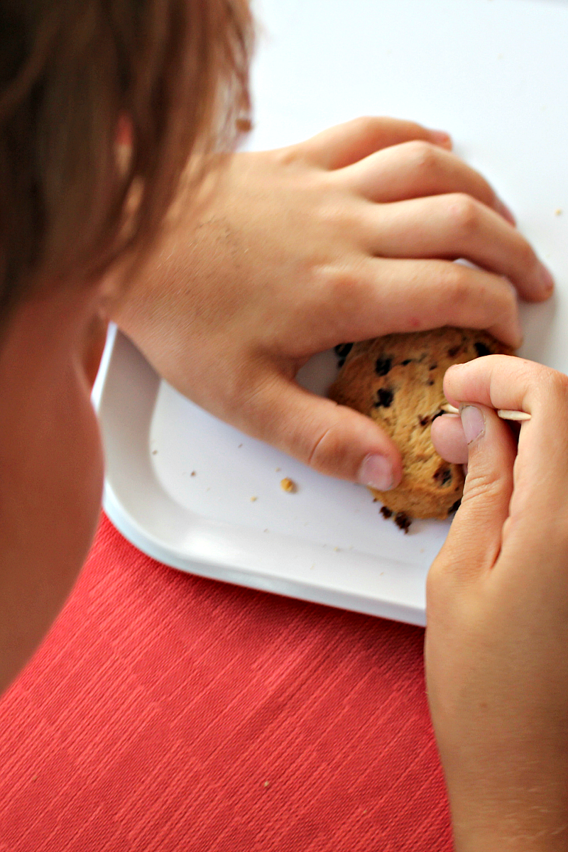 STEM Chocolate Chip Cookie Excavating Activity with Free Recording Printable (Looking for Chips)