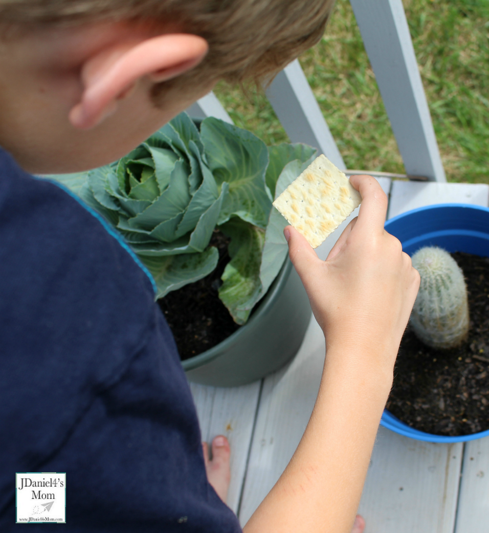 Do Crackers Make Good Pinhole Lens STEM Activity with Recording Sheet (Looking at Cabbage)