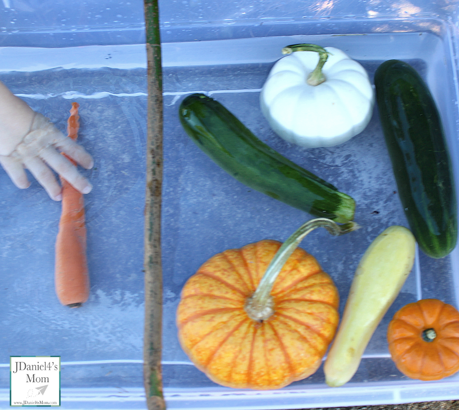 Do Pumpkins Float? Do Other Fruits and Veggies Float? Stop by and see what we learned in this STEM experiment.