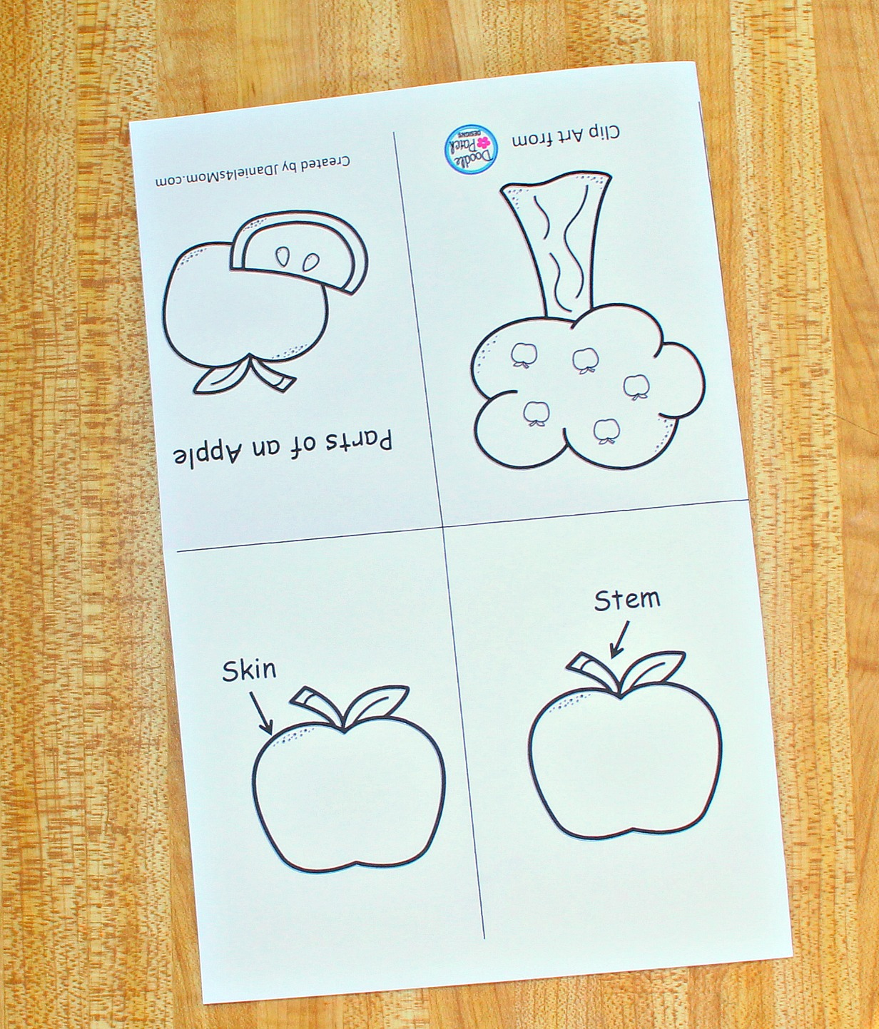 photo relating to Parts of an Apple Printable named The Components of an Apple Printable Study and Coloration E book