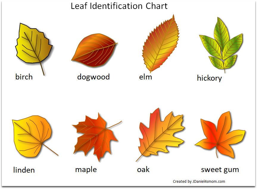 Printable Leaf Identification Chart