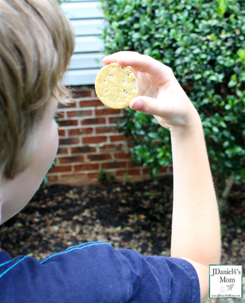 Do Crackers Make Good Pinhole Lens STEM Activity with Recording Sheet (Looking at a Bush.)