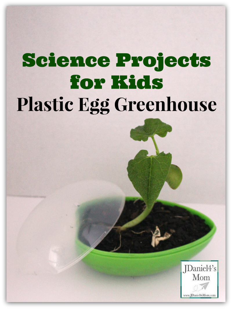 science projects for kids- Plastic Egg Greenhouse
