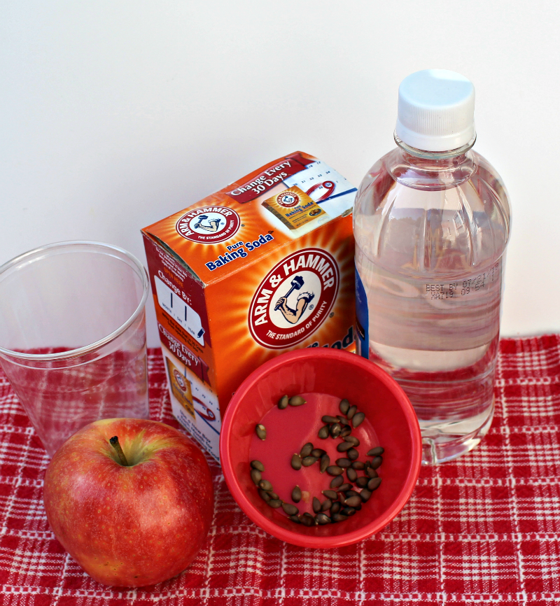 Jumping Apple Seeds from Ten Red Apples Apple Experiment for Kids of All Ages - Supplies
