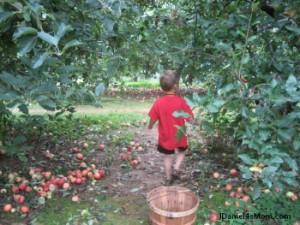 JDaniel and Apples
